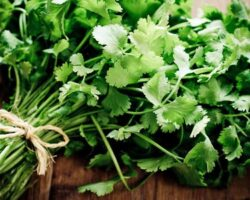 Zesty Cilantro – Salsa's Claim to Fame by Angela Welch, Board Certified Holistic Health Pracititoner.